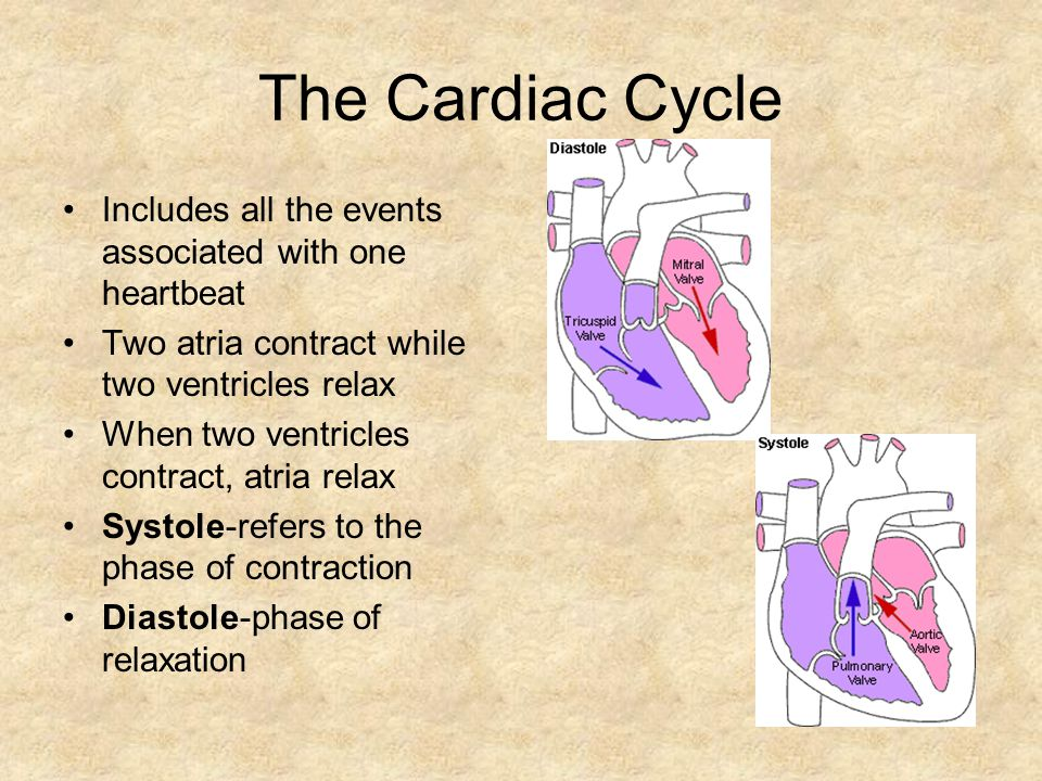 The Cardiac Cycle Includes all the events associated with one heartbeat. Two atria contract while two ventricles relax.