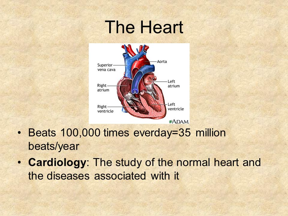 The Heart Beats 100,000 times everday=35 million beats/year