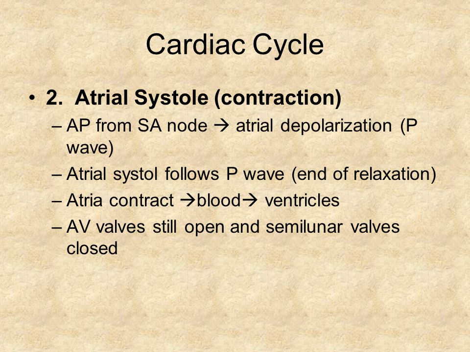 Cardiac Cycle 2. Atrial Systole (contraction)