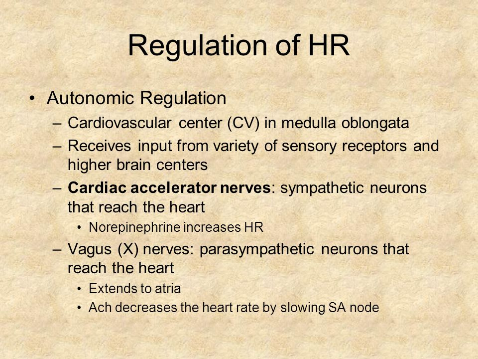Regulation of HR Autonomic Regulation