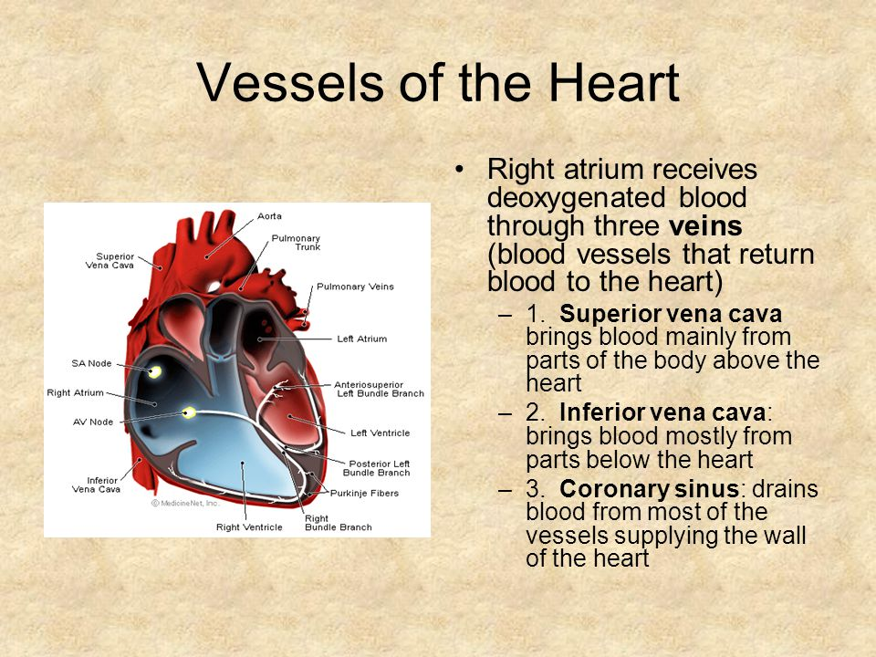 Vessels of the Heart Right atrium receives deoxygenated blood through three veins (blood vessels that return blood to the heart)