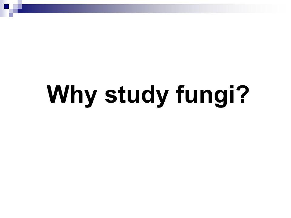 Why study fungi 12