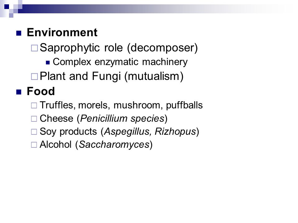 Saprophytic role (decomposer) Plant and Fungi (mutualism) Food