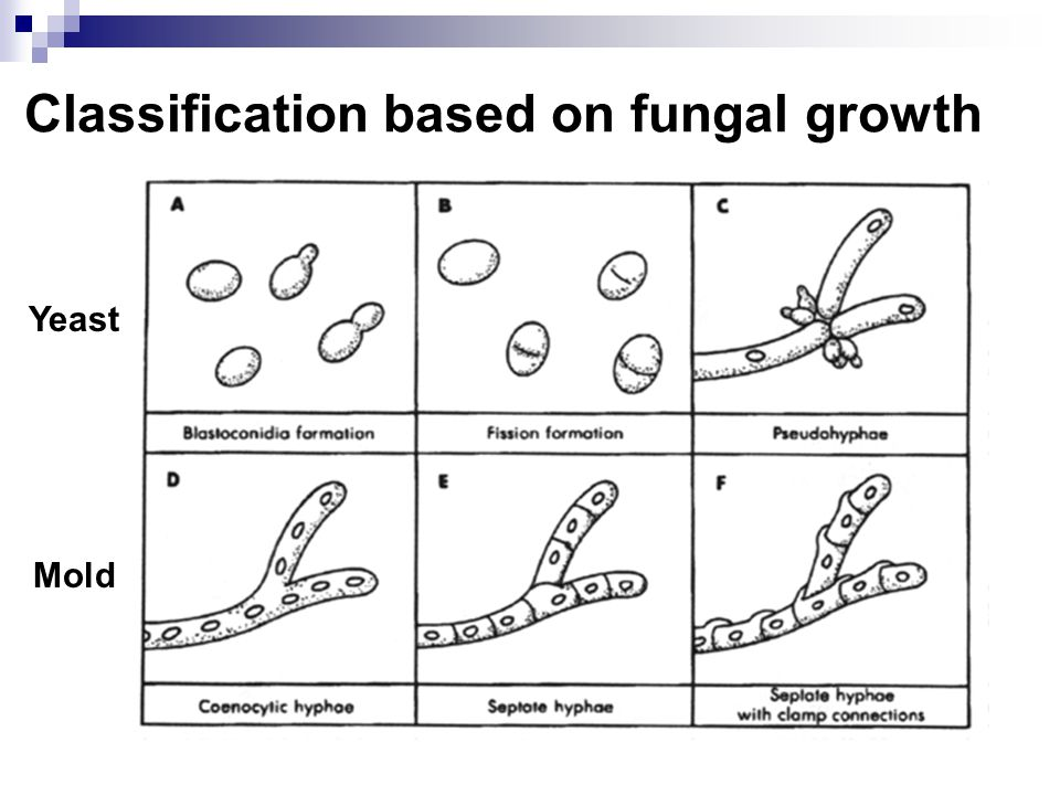 Classification based on fungal growth