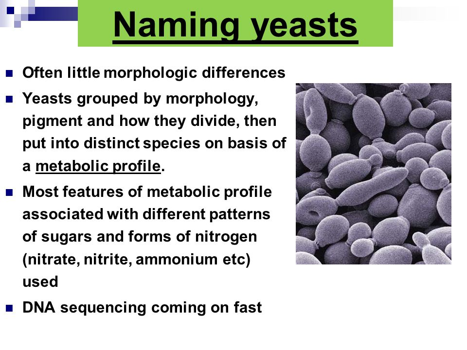Naming yeasts Often little morphologic differences