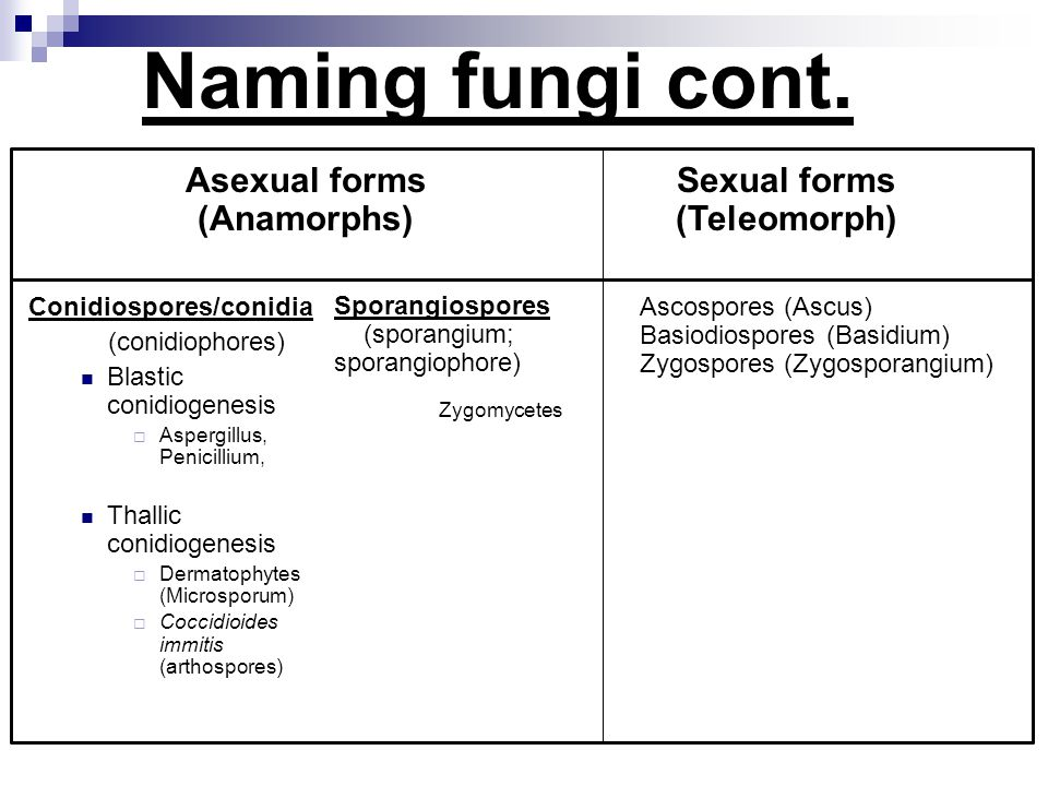Sexual forms (Teleomorph)