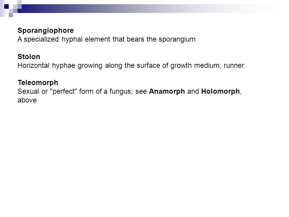 Sporangiophore A specialized hyphal element that bears the sporangium. Stolon. Horizontal hyphae growing along the surface of growth medium; runner.