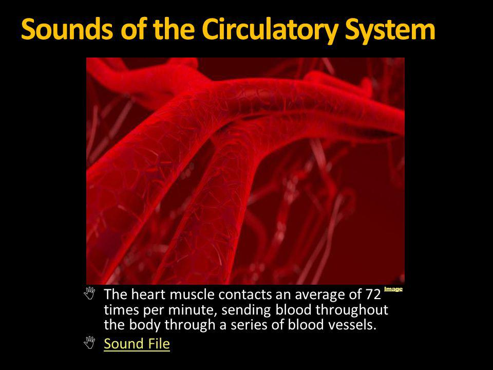 Sounds of the Circulatory System
