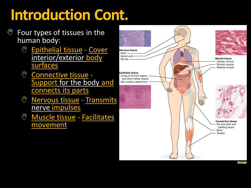 Introduction Cont. Four types of tissues in the human body: