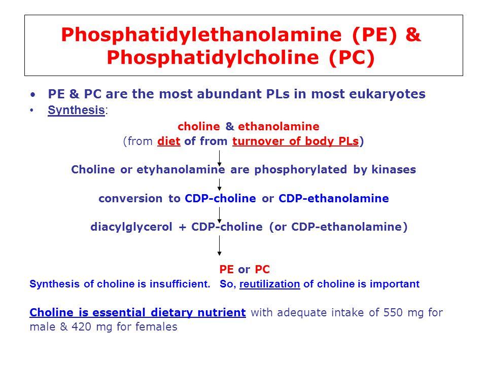 Phosphatidylethanolamine (PE) & Phosphatidylcholine (PC)