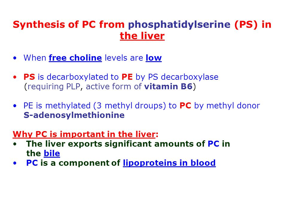 Synthesis of PC from phosphatidylserine (PS) in