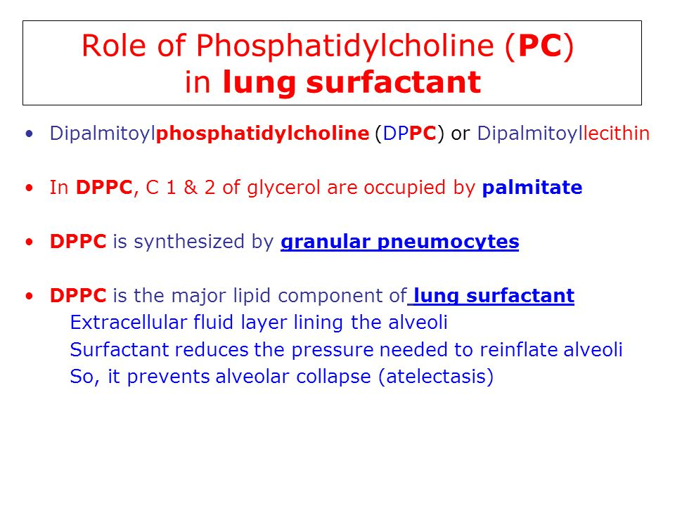 Role of Phosphatidylcholine (PC) in lung surfactant