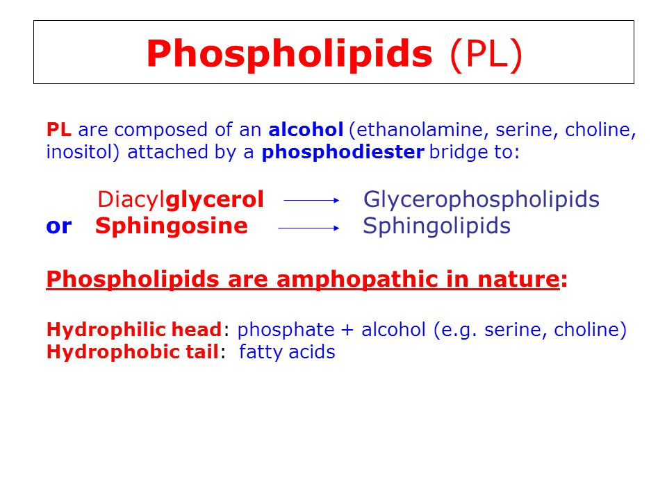 Phospholipids (PL) or Sphingosine Sphingolipids
