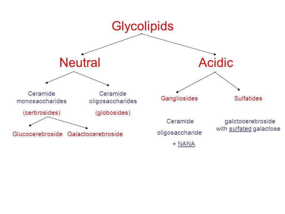 Glycolipids Neutral Acidic Ceramide monosaccharides (cerbrosides)