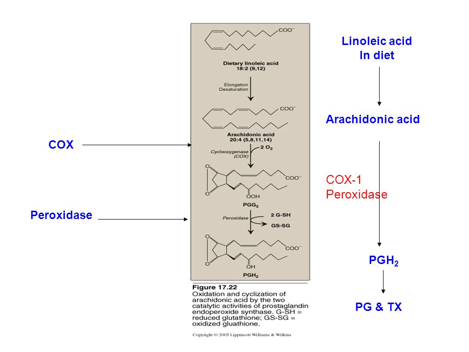 COX-1 Peroxidase Linoleic acid In diet Arachidonic acid COX Peroxidase