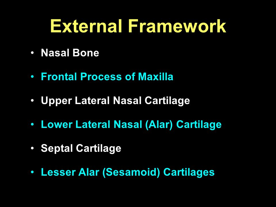 External Framework Nasal Bone Frontal Process of Maxilla