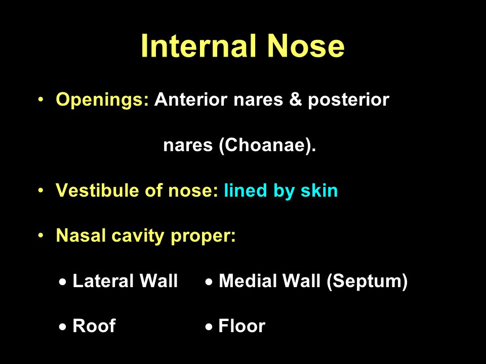 Internal Nose Openings: Anterior nares & posterior nares (Choanae).