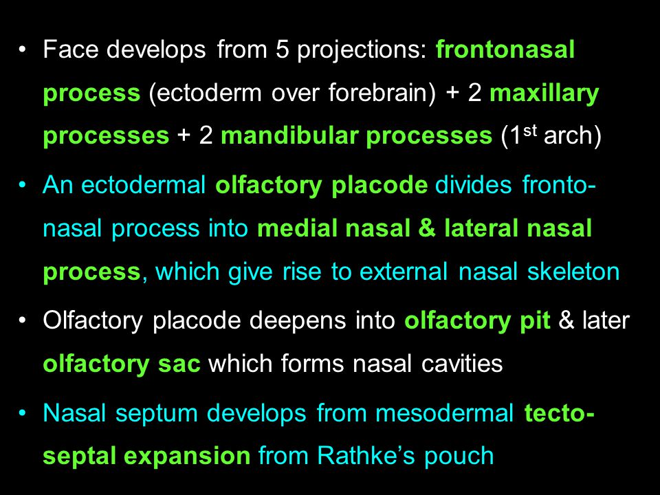 Face develops from 5 projections: frontonasal process (ectoderm over forebrain) + 2 maxillary processes + 2 mandibular processes (1st arch)