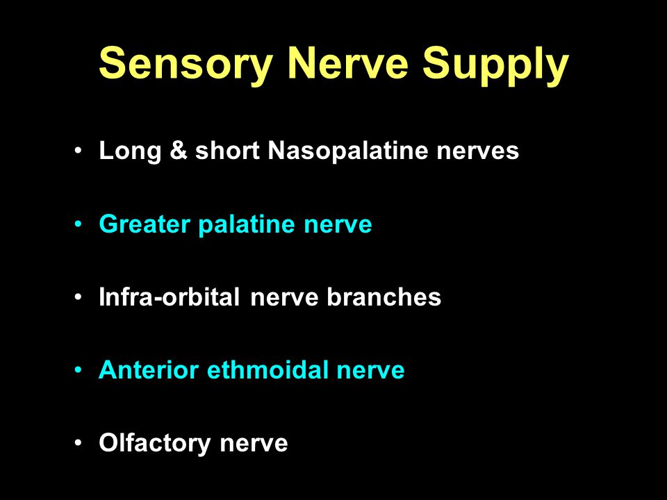 Sensory Nerve Supply Long & short Nasopalatine nerves