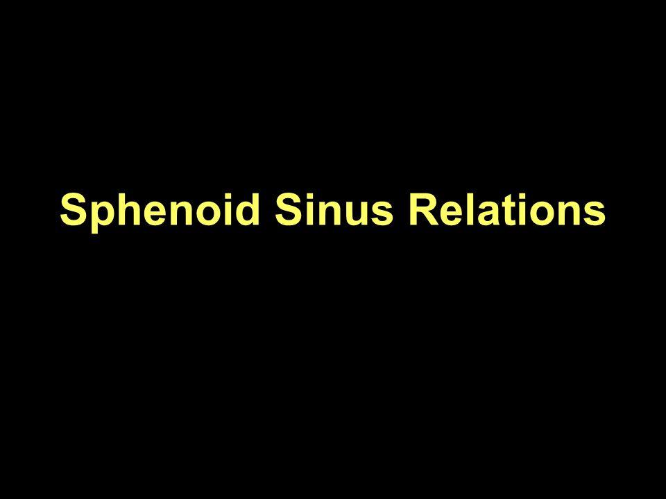 Sphenoid Sinus Relations