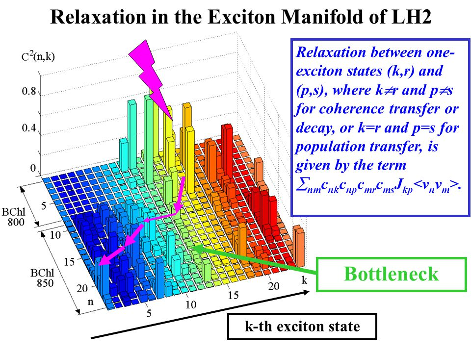 Relaxation in the Exciton Manifold of LH2