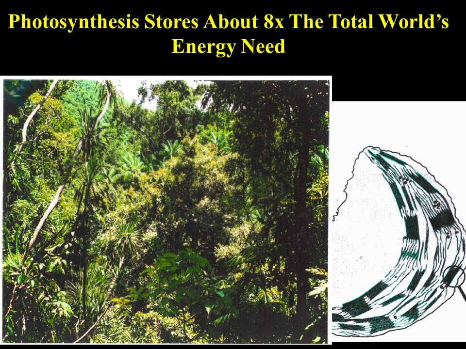 Photosynthesis Stores About 8x The Total World's Energy Need