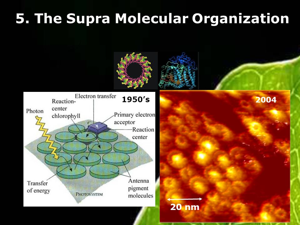 5. The Supra Molecular Organization