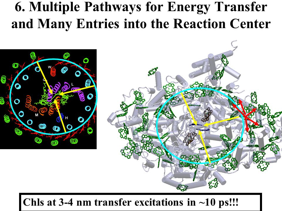 6. Multiple Pathways for Energy Transfer and Many Entries into the Reaction Center