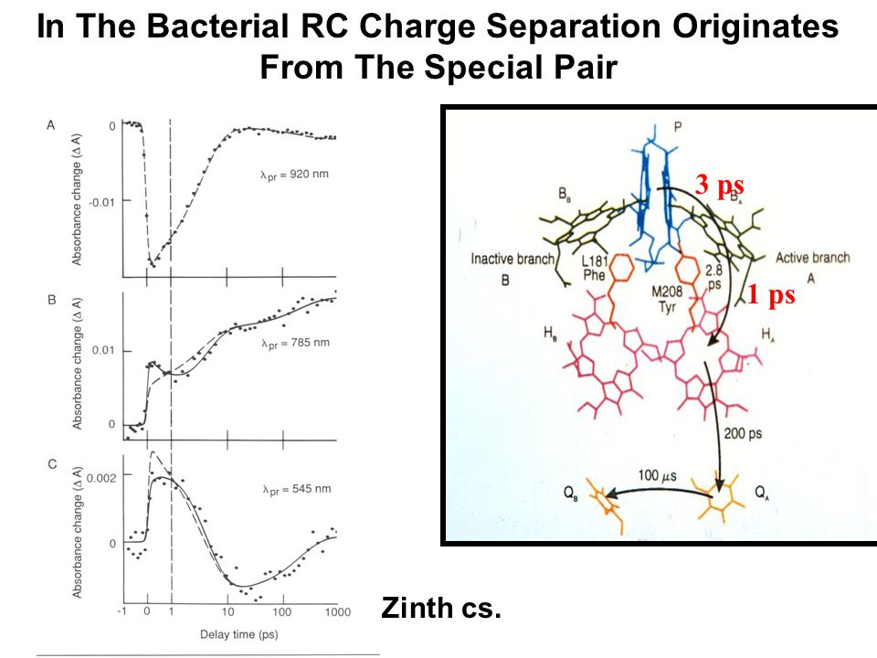 In The Bacterial RC Charge Separation Originates From The Special Pair