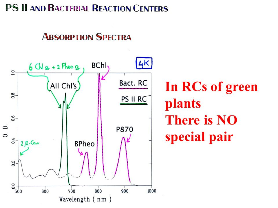 In RCs of green plants There is NO special pair