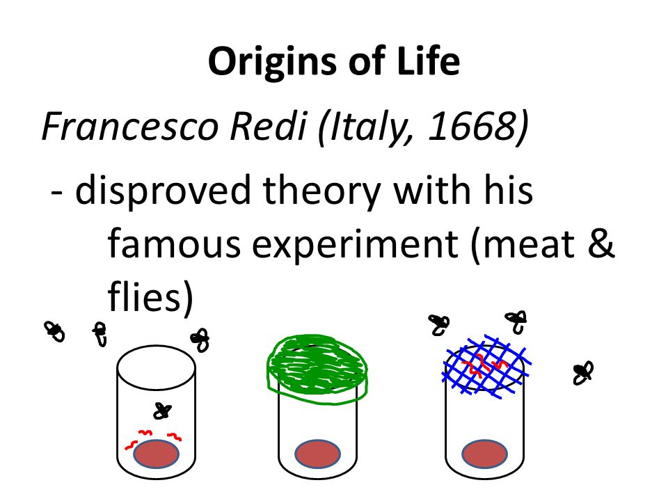 Origins of Life Francesco Redi (Italy, 1668) - disproved theory with his famous experiment (meat & flies)