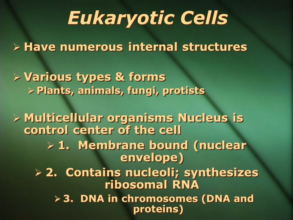 Eukaryotic Cells Have numerous internal structures