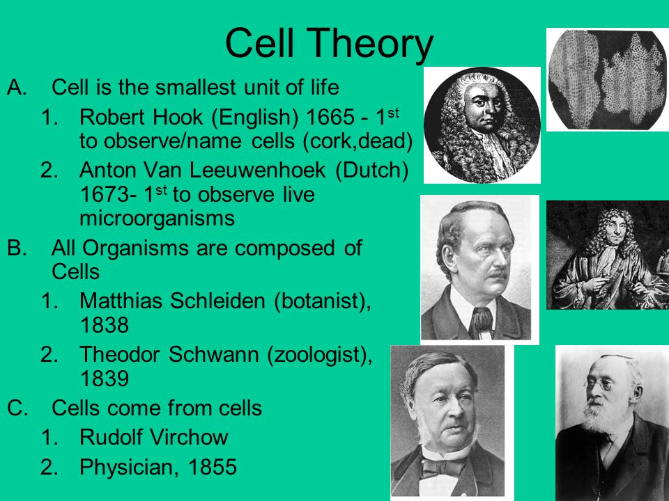 Cell Theory Cell is the smallest unit of life