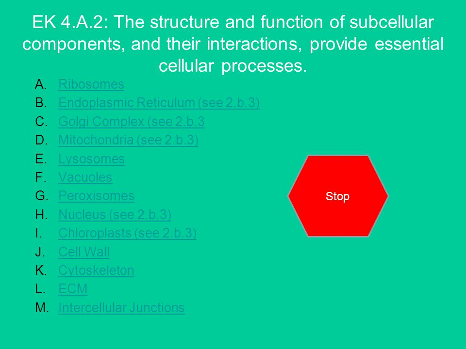 EK 4.A.2: The structure and function of subcellular components, and their interactions, provide essential cellular processes.