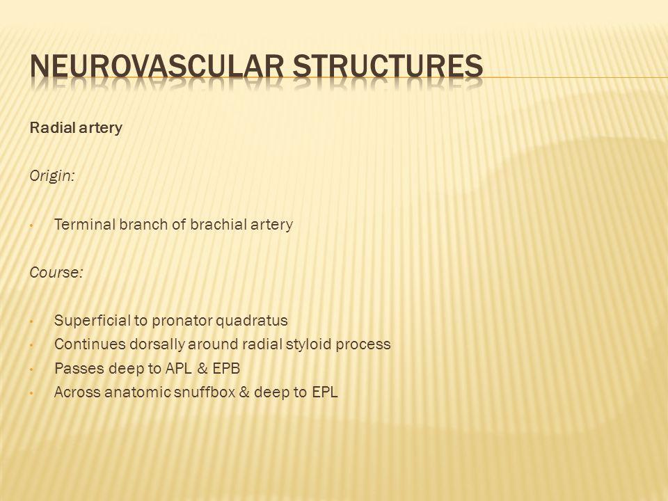Neurovascular structures