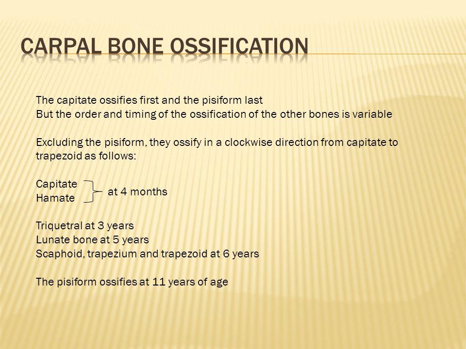 Carpal bone ossification