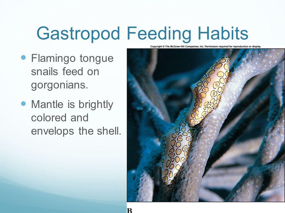 Gastropod Feeding Habits