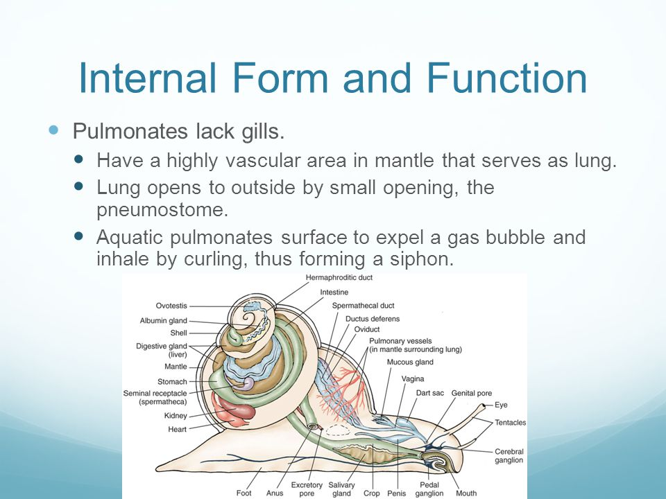 Internal Form and Function