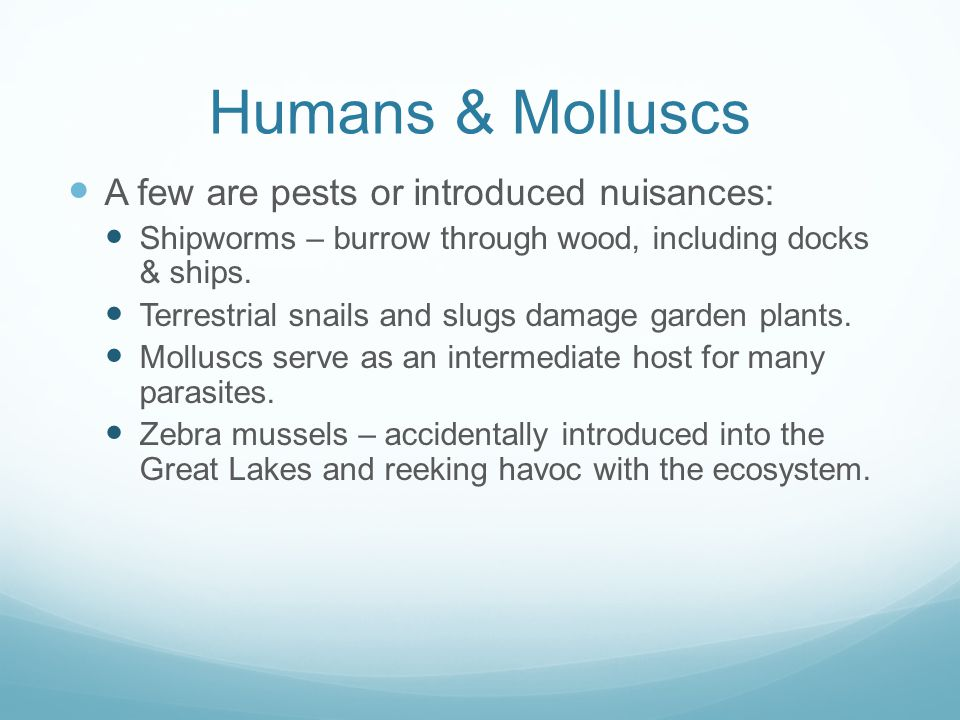 Humans & Molluscs A few are pests or introduced nuisances: