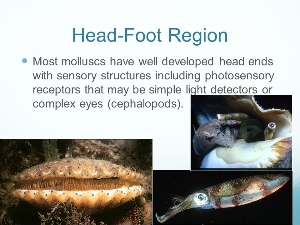 Head-Foot Region