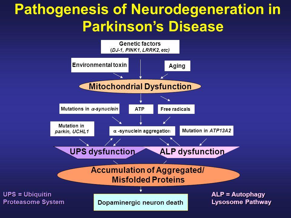 Pathogenesis of Neurodegeneration in Parkinson's Disease