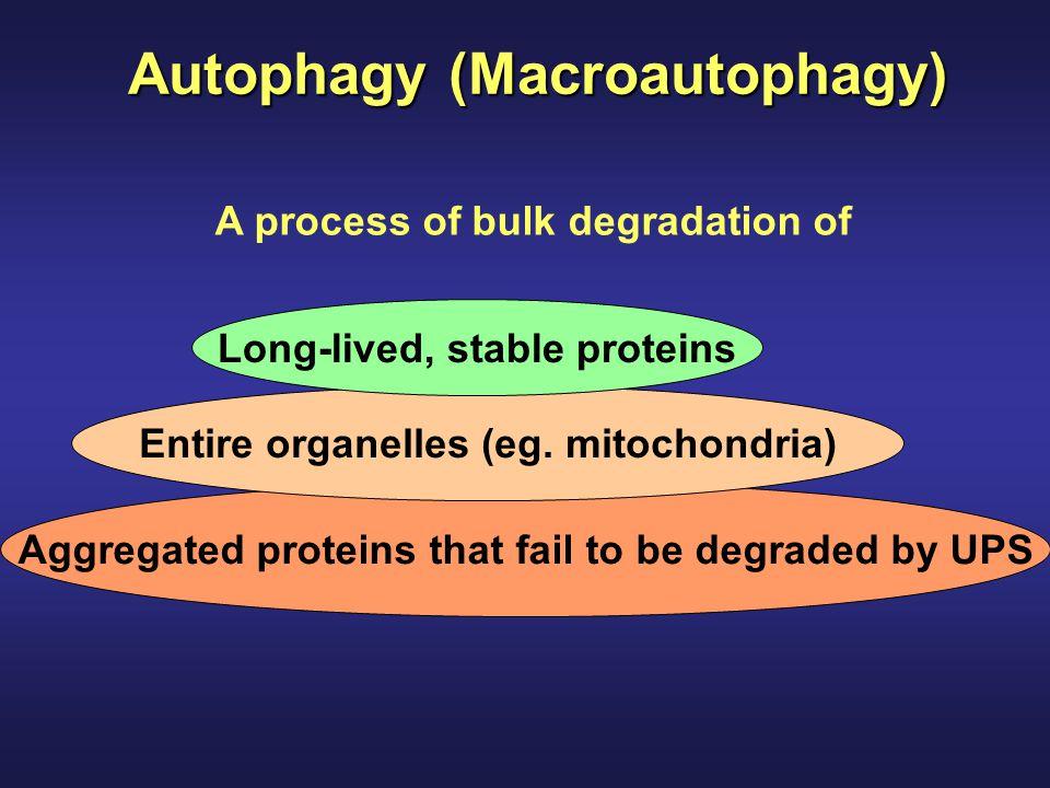 Autophagy (Macroautophagy)
