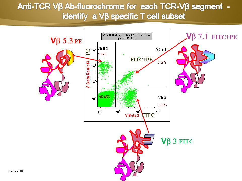 Anti-TCR Vβ Ab-fluorochrome for each TCR-Vβ segment -