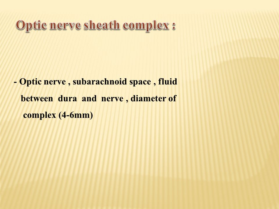 Optic nerve sheath complex :