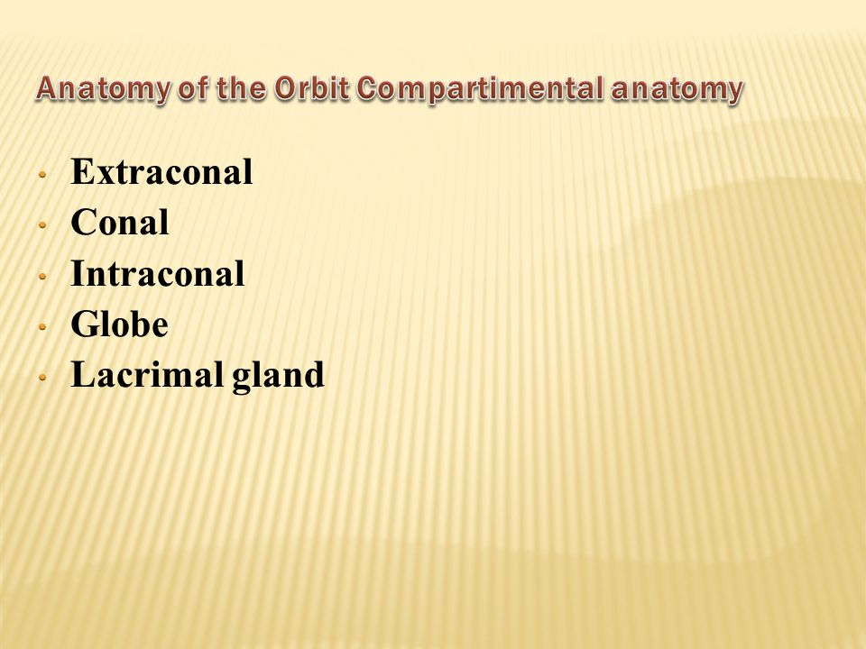 Anatomy of the Orbit Compartimental anatomy