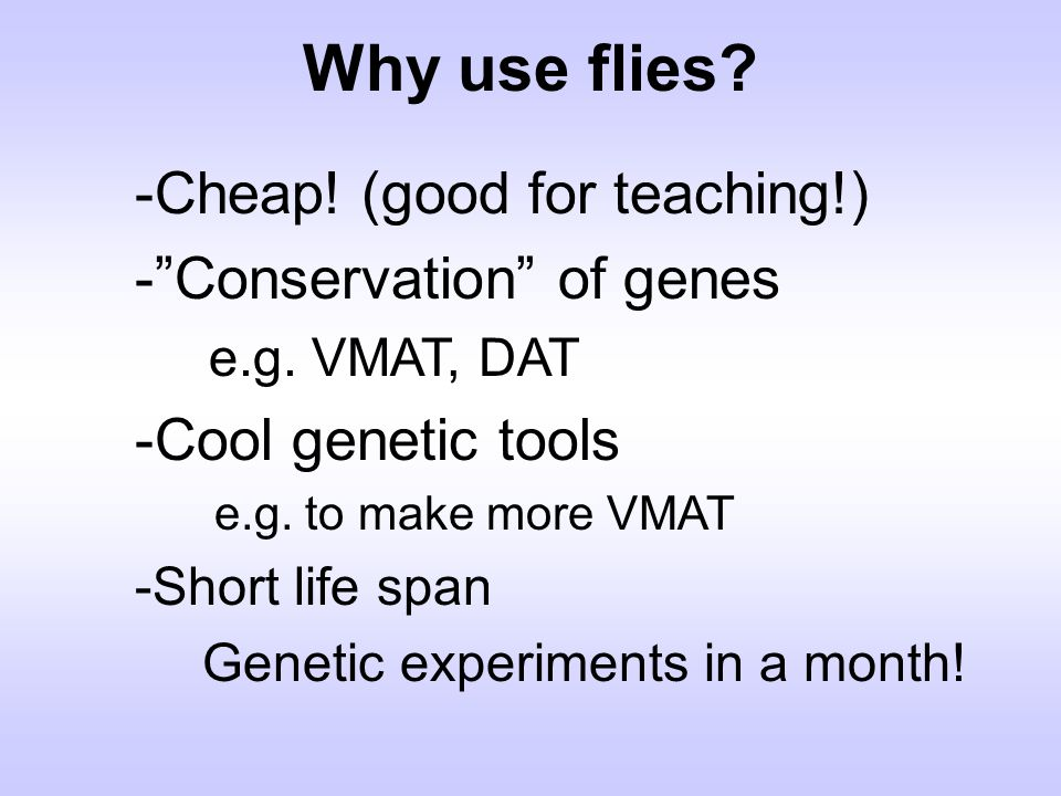 Why use flies -Cheap! (good for teaching!) - Conservation of genes