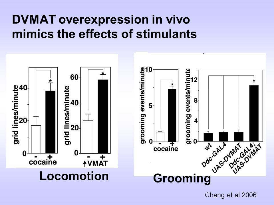 DVMAT overexpression in vivo mimics the effects of stimulants