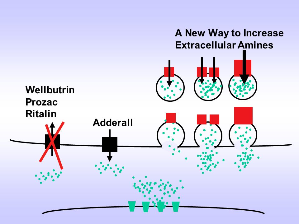 A New Way to Increase Extracellular Amines