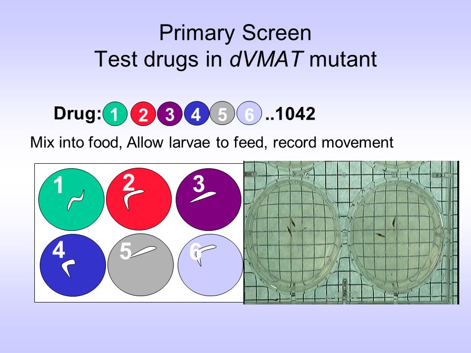 Primary Screen Test drugs in dVMAT mutant