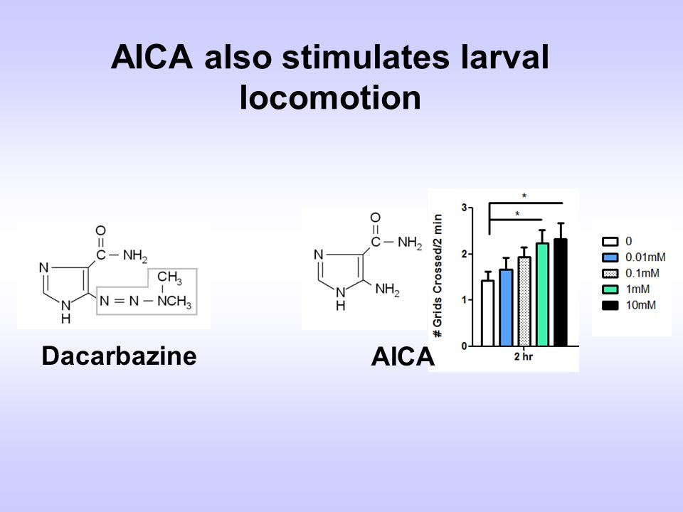 AICA also stimulates larval locomotion
